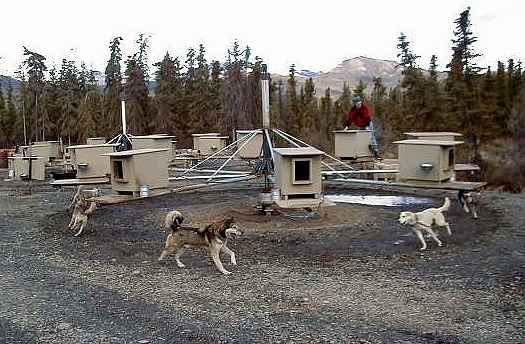 how to make a dog sled with wheels
