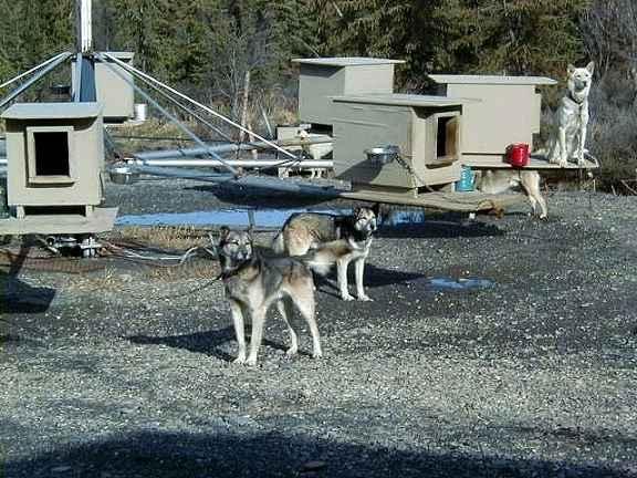 Alaskan Cruisetour Photo Gallery More Jeff Kings Husky - Husky homestead